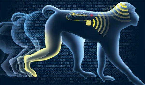ΑΠΙΣΤΕΥΤΟ !! Το εγκεφαλικό εμφύτευμα wi-fi που αντιστρέφει την παράλυση άκρων - VIDEO