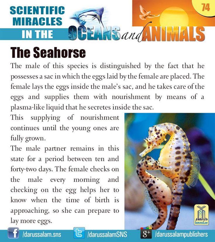 206 best Life Science: aquatitic images on Pinterest ...