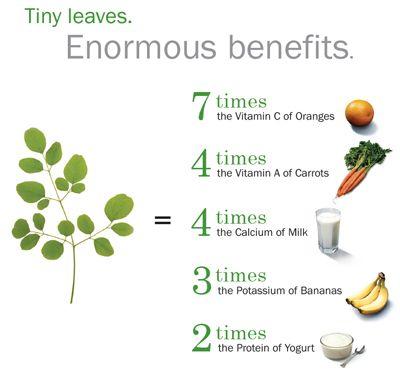 Moringa Diagram: Tiny leaves. Enourmous benefits.