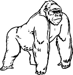 gorilla coloring pages preschool and kindergarten - Coloring Page Gorilla