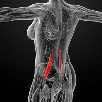 13 best images on pinterest physical therapy massage and anatomy the psoas muscle may be the most important muscle in your body read on to find out whether you might have a psoas muscle imbalance and how to correct it publicscrutiny Images