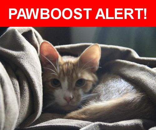 Please spread the word! Lancelot was last seen in Mission, BC V2V 6Y5.    Nearest Address: Corner of Dewdney Trunk Road and Harms, Mission, BC, Canada