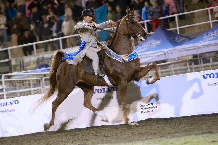 "Saddle Horses SA on Twitter: ""2016 SA Grand Champion Five Gaited ""Valley's Touch The Wind"" – shown by Junior Hugo (Photo Elpita Photography) https://t.co/KLZgDFFkuc"""