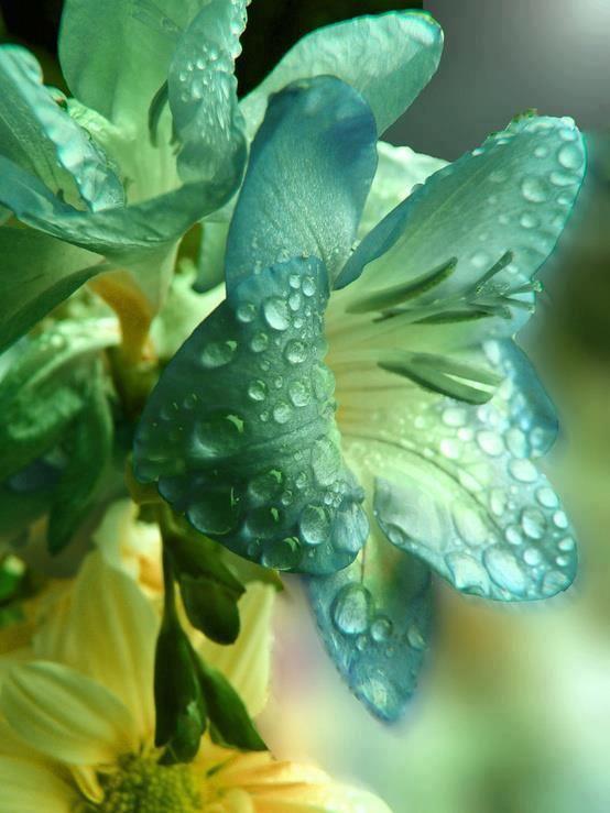 .: Beautiful Flower, Waterdrop, Dew Drop, Raindrop, Blue Flower, Green Flower, Dewdrop, Rain Drop, Water Drop