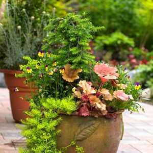 Container-Garden Finder. Check out this little quiz to get a container-garden plan customized for you!