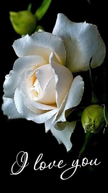 Белые, открытка гиф белые розы