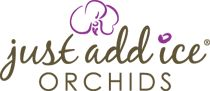 Don't throw out your orchid! I'ts not dead - Just add ice orchid care.