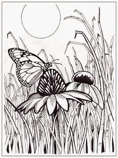 butterfly coloring pages for adult