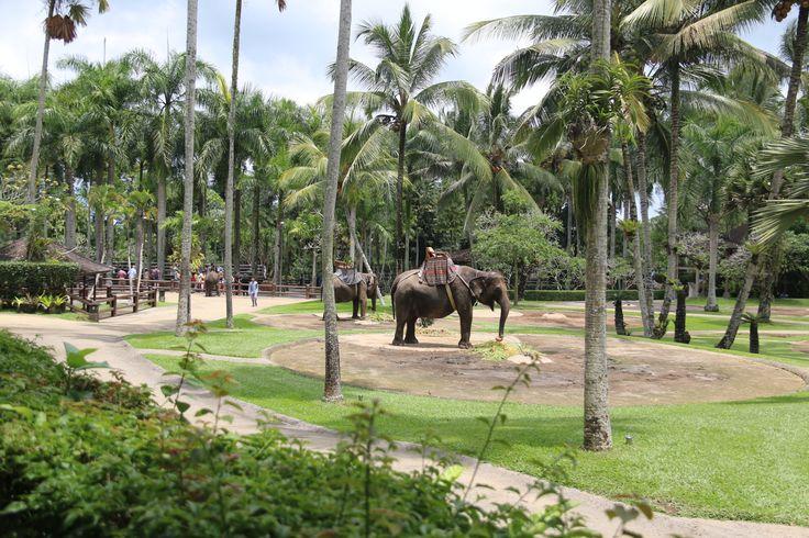 Elephant Safari Park Ubud Bali