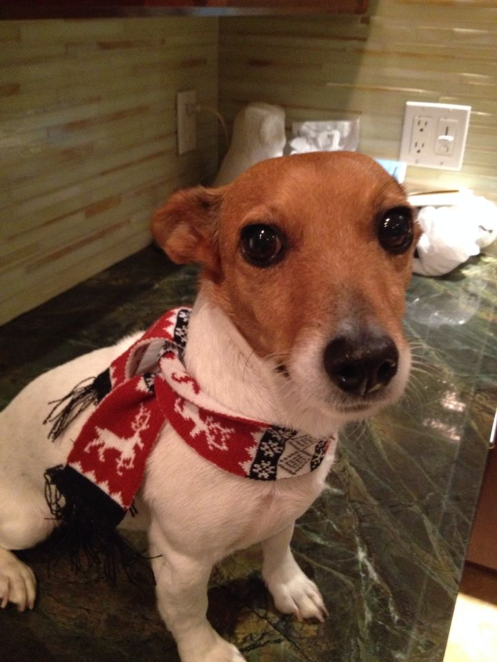 Clemmie with a Maker's Mark scarf. Cheers!