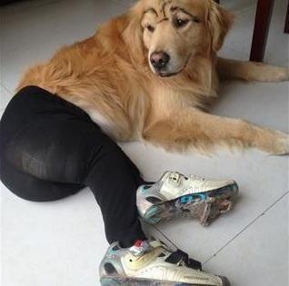 dogs in tights | Dogs In Pantyhose Becomes Popular Meme In China, Labeled Horrifying ...