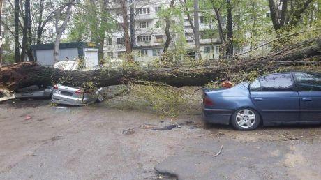 IMAGINI DE GROAZĂ! Un copac S-A PRĂBUŞIT peste mai multe maşini parcate într-o curte din Capitală