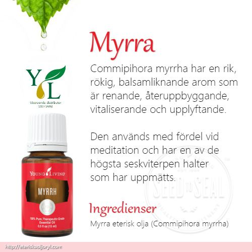Myrra (Commipihora myrrha)eterisk olja har en rik, rökig, balsamliknande arom som är renande, återuppbyggande, vitaliserande och upplyftande.  Den används med fördel vid meditation och har en av de högsta seskviterpen halter som har uppmätts.