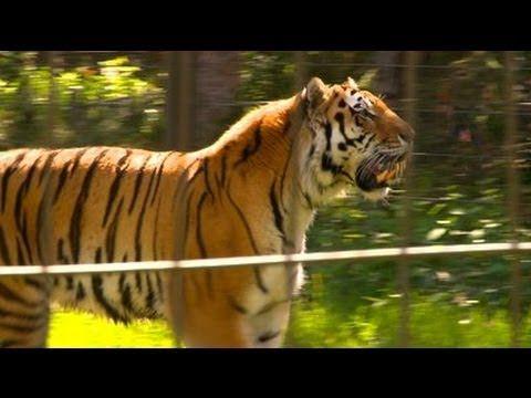 Zoo parc de Beauval - Proxifun - Billets Parc d'attraction et loisirs en France