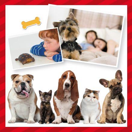 Mascotas, Necesarias en todas las etapas de la vida http://www.inkomoda.com/mascotas-necesarias-en-todas-las-etapas-de-la-vida/