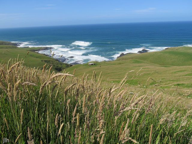 Thi's picture was taken on the coast between the Herekino and Whangape harbors/harbours in the Far North of New Zealand.
