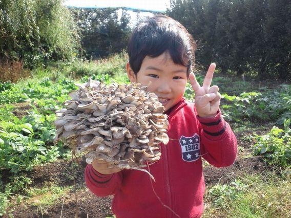 ⑩天然まいたけに近い味、家庭でまいたけを栽培してみよう!