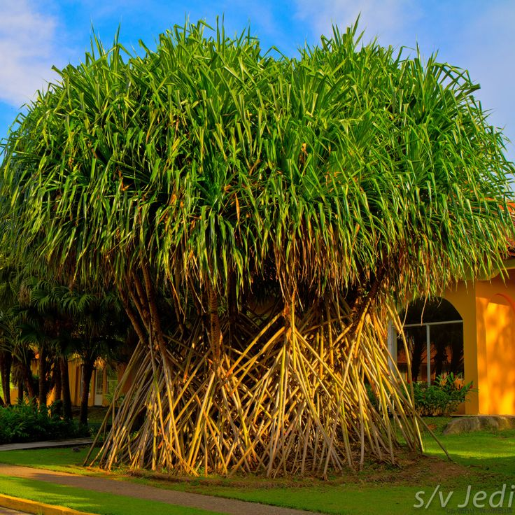 Biogarden Arboles Espectaculares