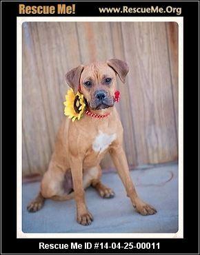 Betty Lou Who needs YOU! - Arizona Small Dog Rescue - Phoenix, AZ Rescue Animals