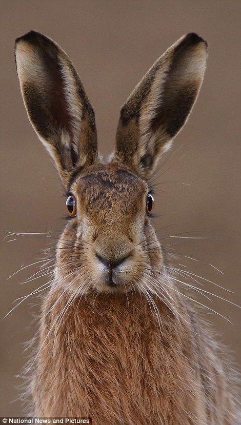 O concurso foi organizado pela Sociedade Internacional de Natureza e Fotógrafos de Vida Selvagem. Trev Wilson foi o grande vencedor, com uma foto de um gua