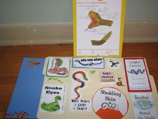 Oak Tree Vibrations: Snake Lapbook ~ find the free download here: http://www.homeschoolshare.com/snakes.php