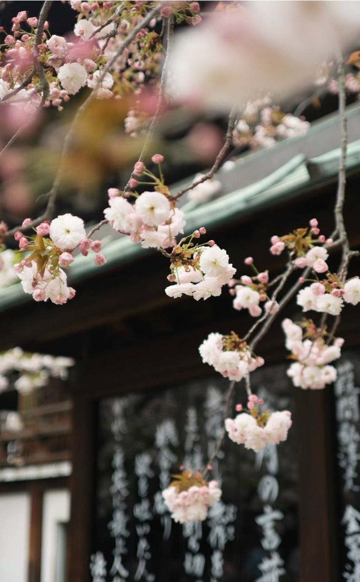 9 affordable luxury travel tips for Tokyo. Make the most of your time with these tips of where to go in Tokyo and things to see in Tokyo including the glorious Cherry Blossom Festival. Where to go in Tokyo / Deals for Tokyo / Attractions in Tokyo / Dining in Tokyo