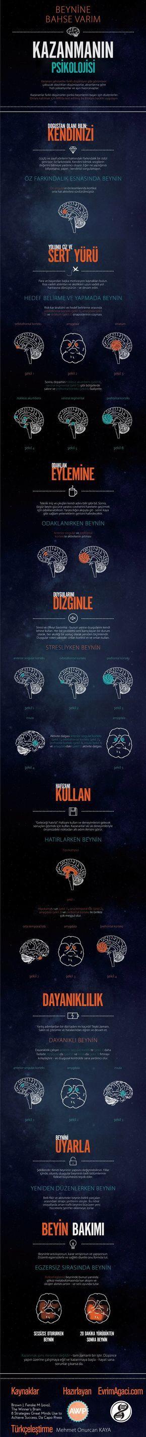 Kazanmanın Psikolojisi: Neden Kazanmak Bu Kadar Önemli? – Evrim Ağacı