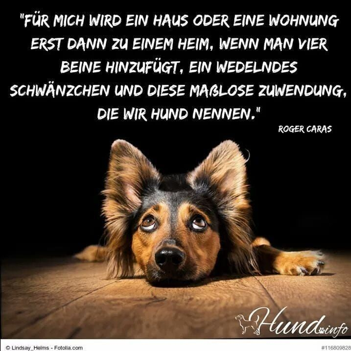 Pin Von Christine Kawohl Auf Suss Spruche Tiere Hunde Zitate Tiere