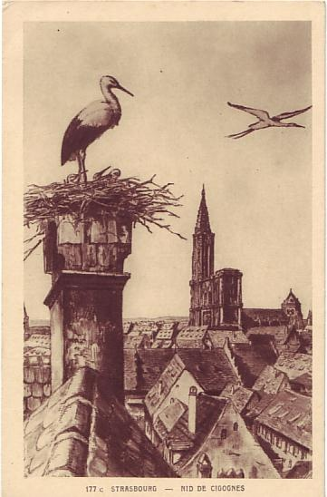 "Cartes ""La Cigogne"" Postcard - Strasbourg - Nid de Cigognes"