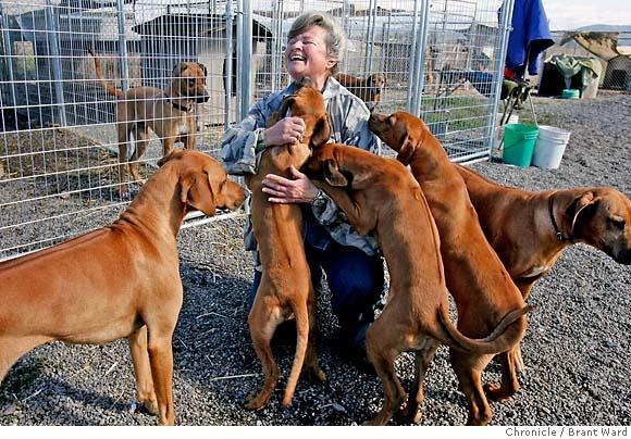 Tiagos peeps!: Dallas Pup, Dream Job, Ridgeback Farm, Dog, Back Yard