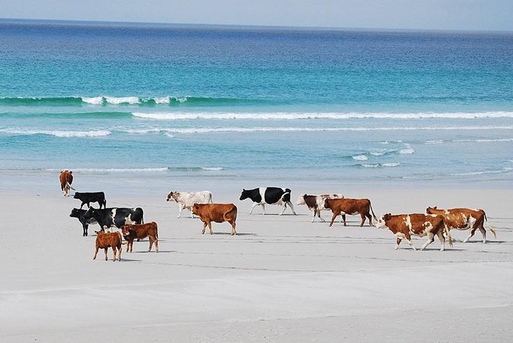Hitting the beach in Barra, Outer Hebrides Islands, Scotland. Picture: Willie Murdoch