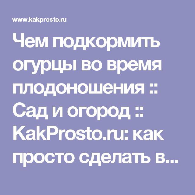 Чем подкормить огурцы во время плодоношения :: Сад и огород :: KakProsto.ru: как просто сделать всё