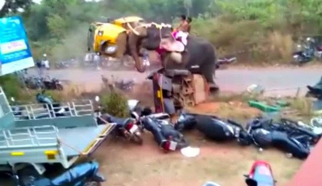 An elephant ran amok during a festival in India's southern Kerala state on Thursday (February 25), attacking nearly 27 vehicles parked near a temple.