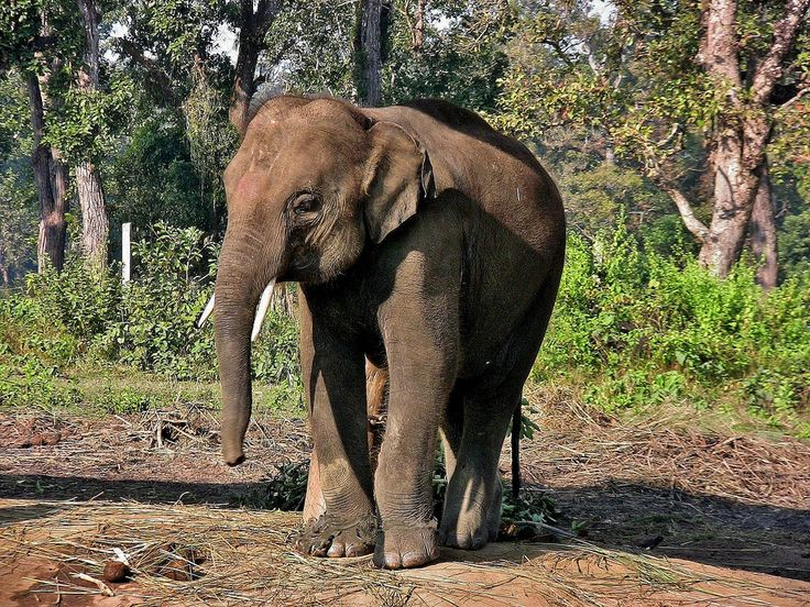 roba66 posted a photo:  NEPAL, Royal Chitwan-Nationalpark, Elefanten-Aufzuchtstation.  NEPAL, Royal Chitwan National Park, visit to an elephant rearing station