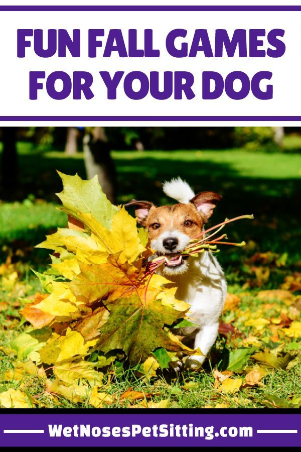 Fun Fall Games For Your Dog Fall Games Dog Games Pets