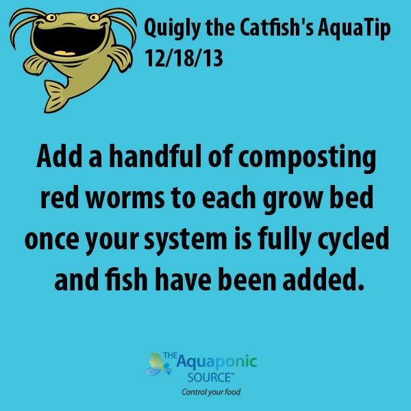 Add a handful of composting red worms to each grow bed once your system is fully…