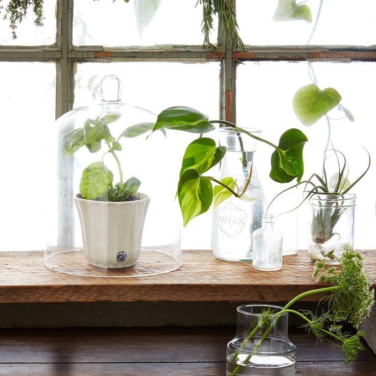 porcelain herb flower pot