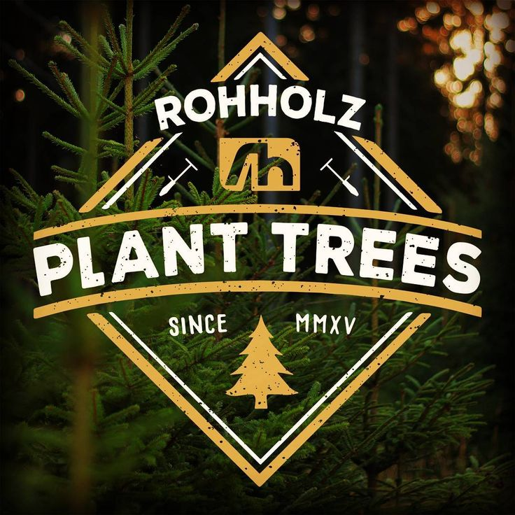 Support your local forest! 🌱 Learn more about the Rohholz project Plant Trees 🌲 #rohholz #trees