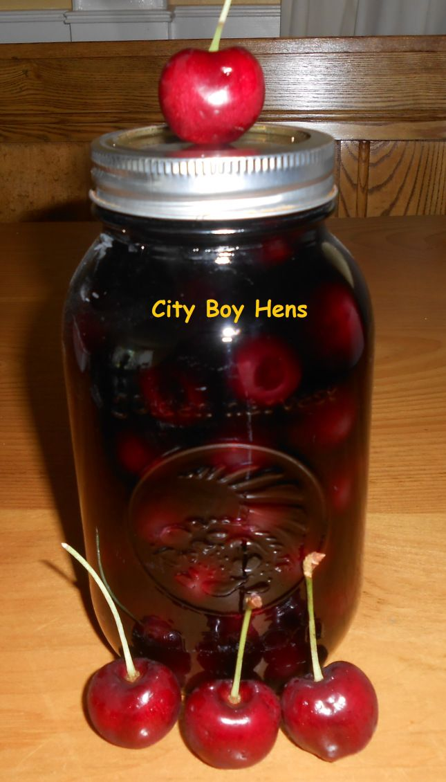 Party time....vodka drunkin cherries....iwash and pit fresh cherries, carefully cram to the fullest in canning jar, add vodka, seal. Wait at least 4 months...cherries will be bright red.