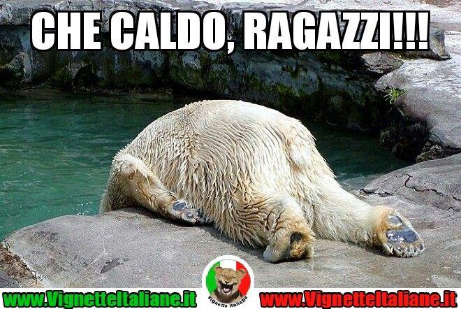 Che #caldo (www.VignetteItaliane.it) #vignetteitaliane.it #vignette #italiane #immagini #divertenti #lol #funnypics #orso #caldo