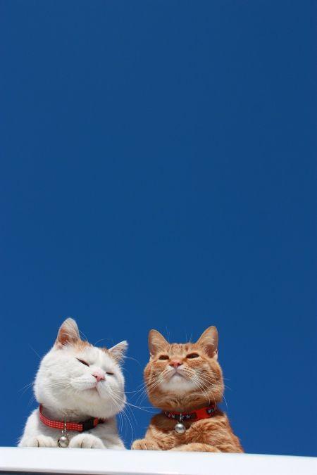 ネコ1「青空でんなあ」ネコ2「・・・そうでんなあ」ネコ1「それじゃあ、話しが続かんがな」ネコ2「・・・そうでんな」ネコ1「もうええわ、ありがとうございました」