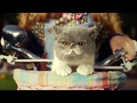 Three   #SingItKitty   cat advert
