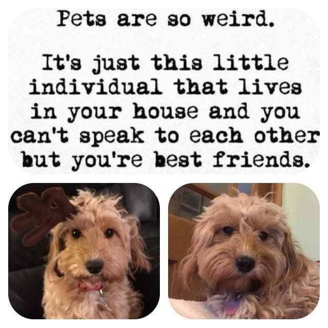 Pin By Diane Beery On I Love Dogs I Love Dogs Dogs Pets