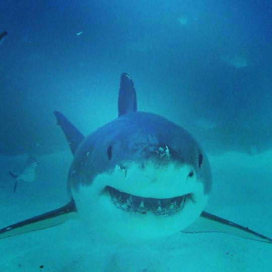 Shark Hugger