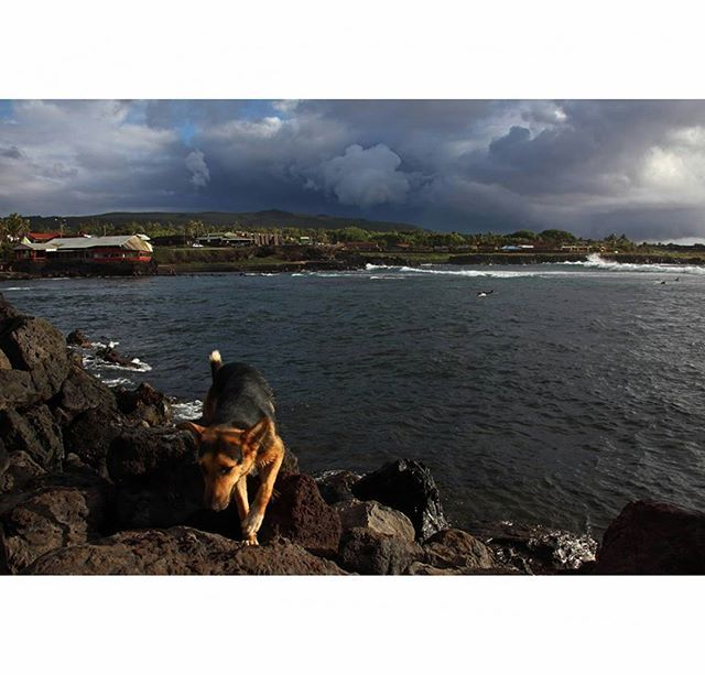 Чили. Остров Пасхи. Ханга Роа. Март 2012. Chile. Easter Island. Hanga Roa. March 2012. #chile #easterisland #rapanui #hangaroa #landscape #travelgram #eye_for_earth #travelphoto #travel #canon #canonphoto #pacificocean #canon_photos #southamerica #discoversouthamerica #southamericatrip #landscape_lovers #landscape_captures #mytravelgram #traveling #sunsets #natgeocreative #worlds_eyes #natgeotravel #travel_captures #dog #photooftheday #nature_wizards #lonleyplanet #piece_of_earth by…