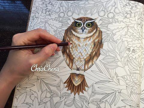 Secret Garden. Color The Owl With Prismacolor Premier Colored Pencils by Chris Cheng. Part 1/2.