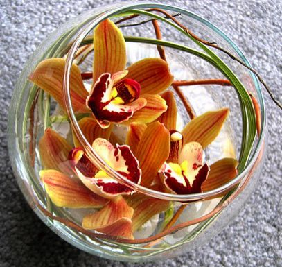 59 best Centerpieces: Cymbidium Orchid images on Pinterest ...