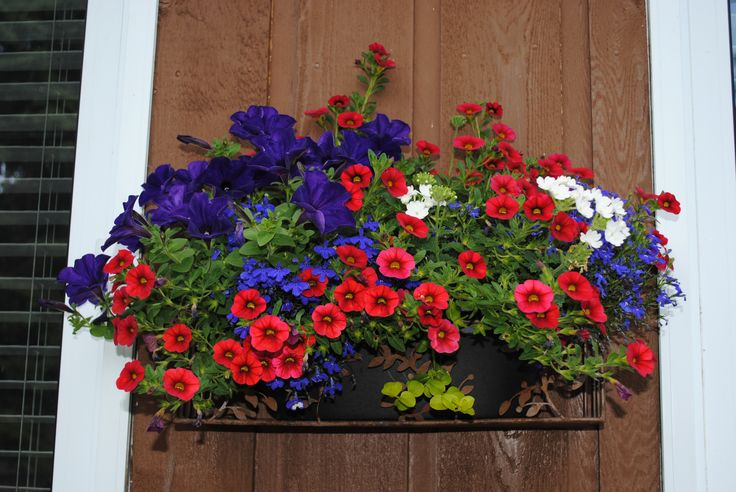 Purple wave petunias, red calibrachoa, blue lobelia and white verbena
