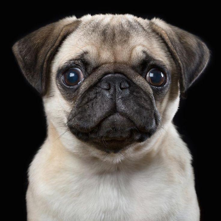 Характер животных в портретах Robert Bahou (Интернет-журнал ETODAY)