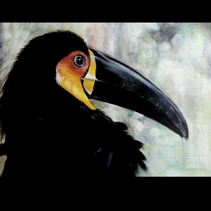 Toucan - colored pencils on paper